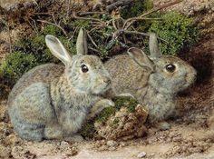 John Sherrin 'Rabbits' 19th century watercolor on paper | Flickr - Photo Sharing!