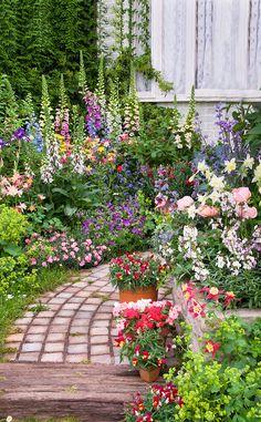 Romantic cottage garden, aquilegia columbine, dianthus, digitalis foxglove, antirrhinum snapdragons, Alchemilla, stone pathway, house window,