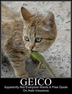 Geico - Everyone Wants A Free Quote On Auto Insurance Except this Cat ---- hilarious jokes funny pictures walmart humor fails