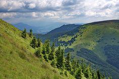 Green tones of Carpathian mountains Airplane Window View, Pictures For Sale, Carpathian Mountains, Camera Art, Landscape Pictures, Places To Travel, Fine Art America, Fine Art Prints, Landscapes