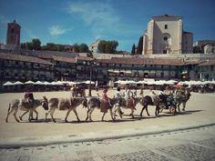 La imagen del fin de semana nos la trae @JCPP72. Burros, Plaza, Terrazas e Iglesia. Todo en uno... #DescubreChinchón