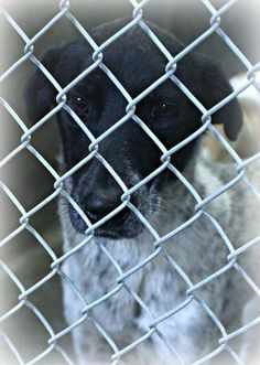 ~~ WILL DIE if not out be 7PM Thursday 06/24/14~~! URGENT!!!! Heeler mix male 1-2 years old  Kennel A1 Available NOW ****$51 to adopt  Located at Odessa, Texas Animal Control. 432-368-3527.