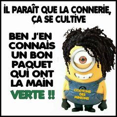 citation des minions -