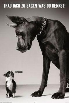 Trau dich was zu sagen Hunde  Größe (cm), ca. 61x91,5 Poster, NEU
