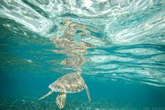 San Pedro, Belize. San Pedro Belize, Ambergris Caye, Things To Do, Travel, Animals, Things To Make, Viajes, Animales, Animaux