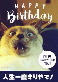 笑う柴犬のお誕生日おもしろ画像 Birthday Messages, Birthday Wishes, Birthday Cards, Happy B Day, I Am Happy, Animals And Pets, Funny Animals, Happy Birthday Animals, Funny Cards