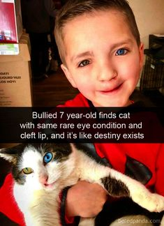 Lustige Katzenbilder - Humour Ninja - Funny Memes and Funny Pictures - Pin Cute Funny Animals, Cute Baby Animals, Funny Cute, Cute Cats, Funny Pics, Pretty Cats, Funny Baby Memes, Fancy Cats, Funny Humour