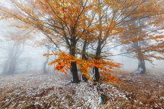 Last Days of Autumn by martas. Please Like http://fb.me/go4photos and Follow @go4fotos Thank You. :-)