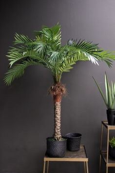 Silk Areca Palm Tree 7 Feet.Silk Areca Trees. Silk Palm Trees Make It Easy  To Fill Any Empty Corner Of Your Living Room, Home Or Office. Need A Silu2026