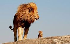 """""""Everything the light touches. What about that dark shadowy place over there?"""" """"That is beyond our kingdom. You must never go there Simba."""" -mufasa and Simba in """"the lion king"""" Beautiful Creatures, Animals Beautiful, Beautiful Lion, Animals Amazing, Beautiful Family, Images Bible, Baby Animals, Cute Animals, Wild Animals"""