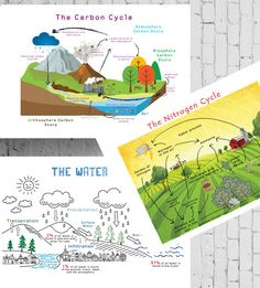 Printable Chemistry Cycles Posters Carbon by PalaeoPrintsStudio