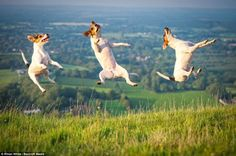 Jumping for joy! Hilarious freeze-frame photographs capture playful dogs on camera as they leap through the air