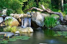 Pond with Lily Pads, Rocks and Boulders, Waterfall Feature