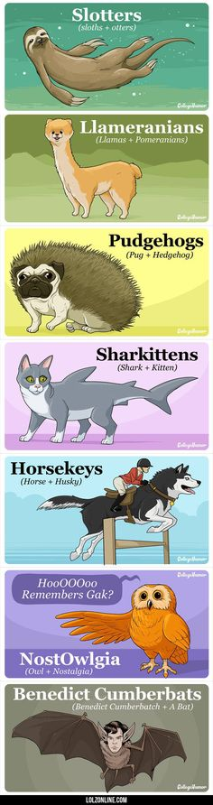 Animals That Would Break The Internet If They Existed#funny #lol #lolzonline