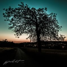 Tree Path by Matthias Gaberthüel, via Paths, Celestial, Sunset, Flowers, Outdoor, Outdoors, Sunsets, Outdoor Games, Royal Icing Flowers