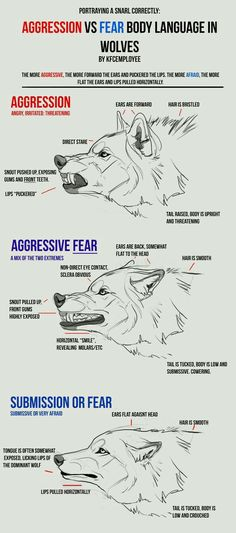 Agression vs Fear in Wolves cheat sheet: Snarls by KFCemployee on DeviantArt < reference sheet wolf emotions Animal Sketches, Animal Drawings, Drawing Animals, Wolf Drawings, Anatomy Reference, Drawing Reference, Design Reference, Drawing Techniques, Drawing Tips