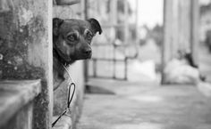 Perro in Cuba by Bruno Moreira on 500px