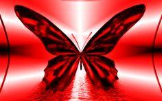 Red Butterfly Widescreen Wallpaper » WallForU.com   Free HD Wallpaper