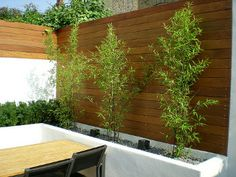 black bamboo provides contrast with the hard landscaping