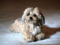 Needle Felted Dog~ Custom Sculpture~Daisy Dog~Charlie by Gourmet Felted This looks so real I had to enlarge it to check and see if it is really needle felted!
