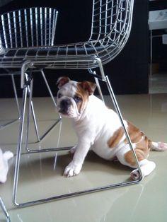 Puku as a pup
