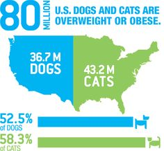 Pet Obesity: A Growing Problem.  Our pets are getting bigger, and they need our help to get back to a healthy weight.  On your next visit to the veterinarian, ask them for tips on helping your dog or cat shed some extra pounds.