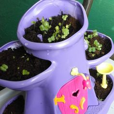 So much growth in just 4 days  #myfairygarden #playmonster #playmatestoys #garden #nature #beauty My Fairy Garden, Child Love, Growing Plants, Planter Pots, Nature, Nature Illustration, Off Grid, Mother Nature, Plant Pots