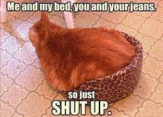 Fat Cats... O_o