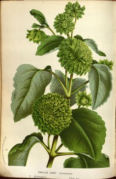 v.19 ([1873]) - Flore des serres et des jardins de l'Europe - Biodiversity…