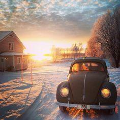 [ Snow Beetle ]