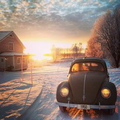 [ Snow Beetle ]