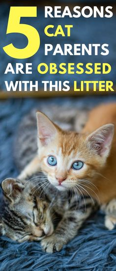 Cat Care Health 5 Reasons Cat Parents Are Obsessed With This Litter - Baby Animals Pictures, Funny Animal Pictures, Animals And Pets, Funny Animals, Cute Animals, Cute Kittens, Cats And Kittens, Pretty Cats, Beautiful Cats