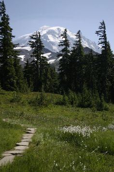 Spray Park, Mt. Rainier. Roundtrip: 7.5 miles, Elevation Gain: 1600 ft, Highest Point: 6400 ft