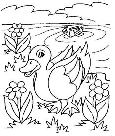 donald duck donald and daisy duck printable coloring pages disney