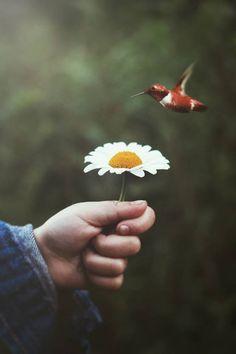 Um lugar pra chamar de Meu...: Milagre é o improvável gesto de carinho que impulsiona o ser humano a não deixar de acreditar.