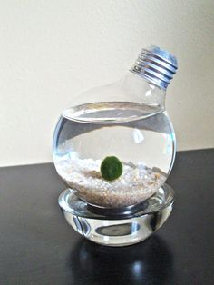 "Marimo pet. It's a live green algae, which naturally forms a cute round shape. It will grow bigger slowly over time. It gets its name from Mari meaning ""ball"" in Japanese and ""mo"" meaning algae in Japanese. Japanese people consider Marimo ball as a National Treasure and believe that it will bring good luck, so it's very popular in Japan."