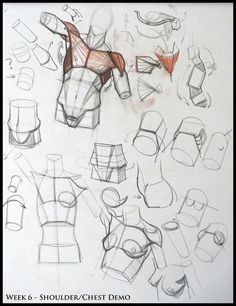 Kevin Chen – Anatomy Drawing Tutorial