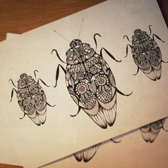 Black and white art. Ink drawing of beetle insects with flower and feather wing patterns. Modern graphic nature illustration.