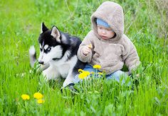 Siberian Huskies established since 1996 providing Beautiful and Healthy Siberian Husky Puppies For Sale AKC & USDA Inspected & Approved Siberian Husky Breeder.