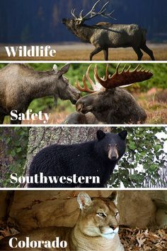 Learn how to protect yourself and wildlife while in Southwestern Colorado