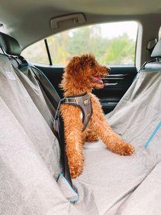 Dog Car, Dog Travel, Dog Harness, Your Dog, Shapes, Dogs, Fun, Pet Dogs, Doggies