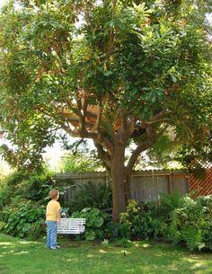dream-treehouse