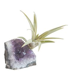 Amethyst Geode Chunk With Air Plant   Surprise your mom, sister, or best friend with one of these creative ideas from our 2016 Holiday Gift Guide. Or, find more great gifts for everyone on your list here.