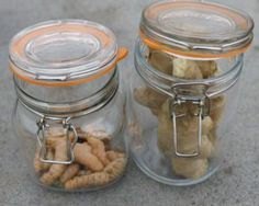 Ginger and Tumeric – How to grow these Super Roots – The Green Green Gate Tumeric Root, Grow Turmeric, Tumeric And Ginger, Growing Ginger, Learn Something New Everyday, Natural Garden, Mason Jar Wine Glass, Tropical Garden, Gardening