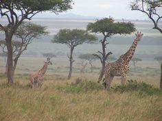 Safari, Kenya 2011