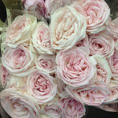 One of my favorites - Prince Jardinier Rose. David Austin roses & other (scented) garden roses available @ the webshop of Parfum Flower Company, located in Aaslmeer sending scented roses throughout Europe