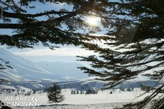Lebanon's Cedars - أرز لبنان  http://fb.com/WeAreLebanon