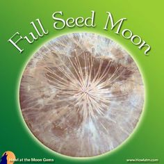 I call the full moon in April the Seed Moon. This name indicates the season most appropriate for planting the seeds for what you hope will flourish in the coming season of growth and fertility. Full Moon Names, April Full, Howl At The Moon, Sabbats, Fertility, Flourish, Pagan, Planting, Astrology