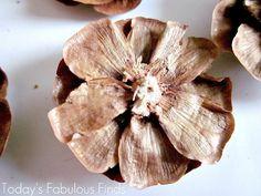Pine Cone Flower_5955 (700x525, 173Kb)