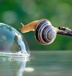 Beautiful photos of snails captured using a macro lens by talented Ukrainian photographer Vyacheslav Mishchenko.